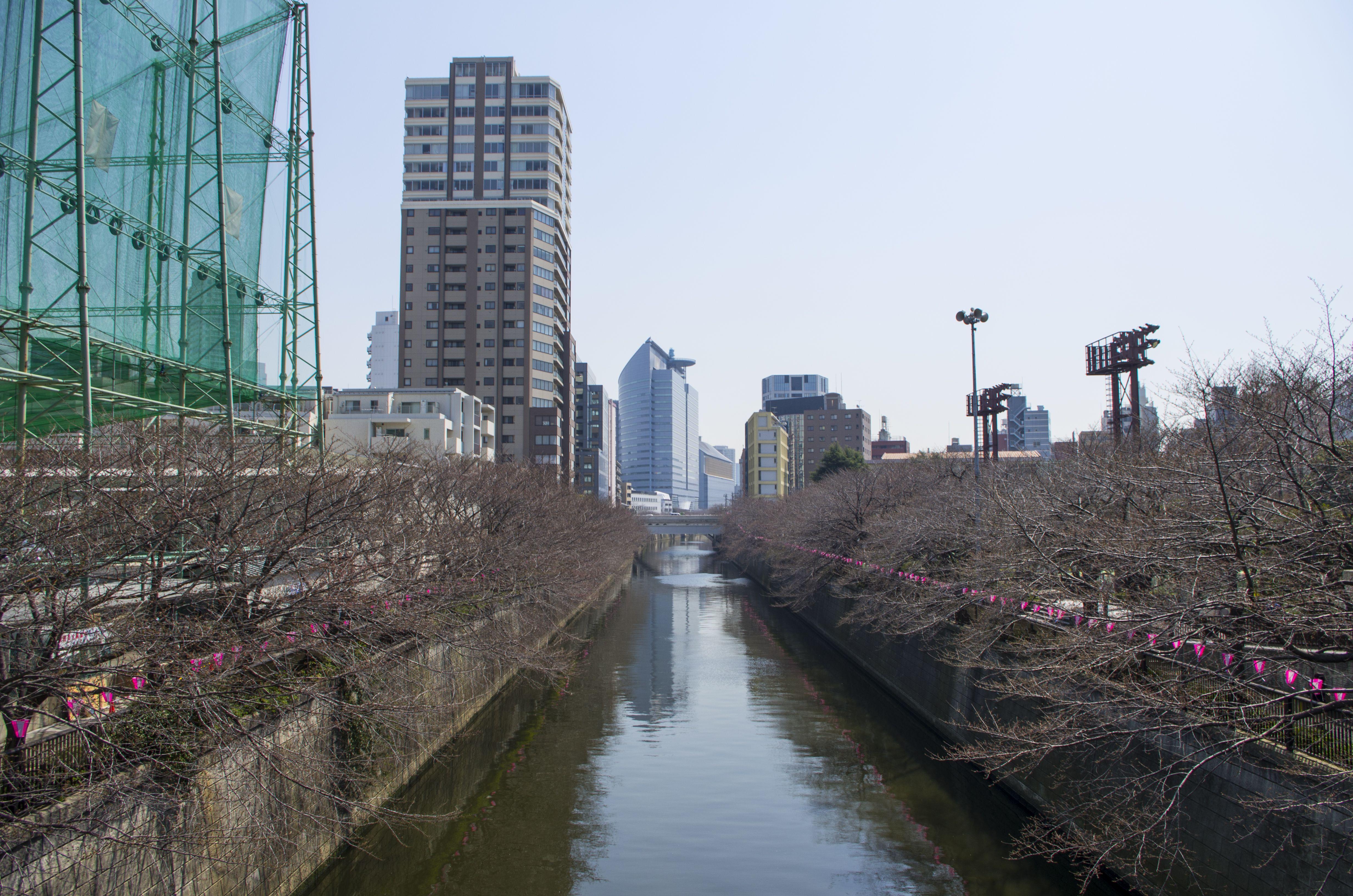 Banks of Meguro river prepared for the hanami festival