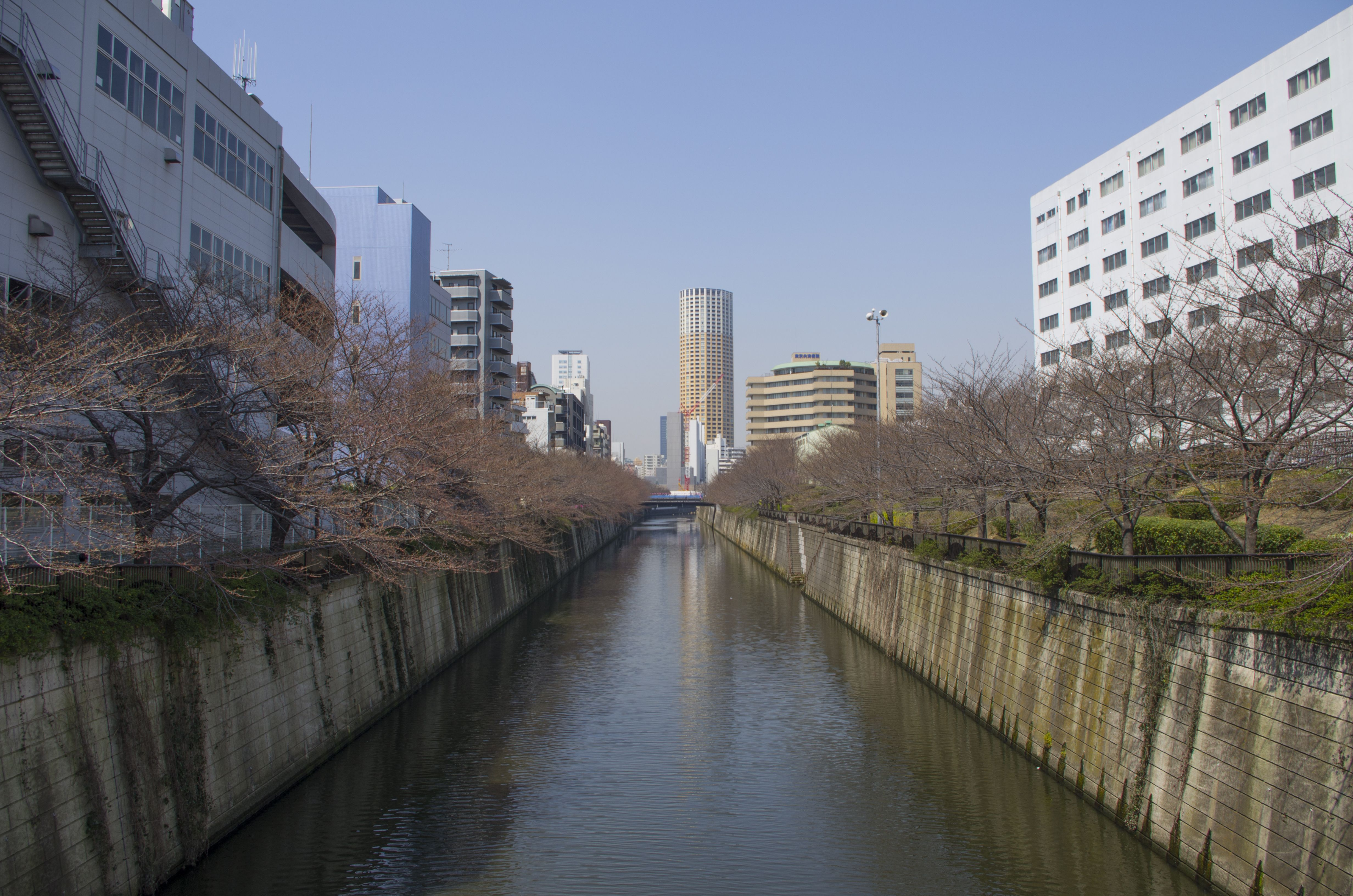 Meguro river and its riverbanks again