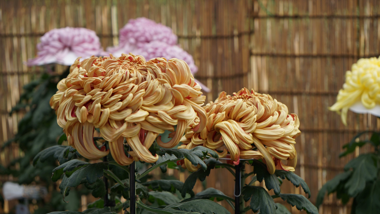 Jindai Botanical Gardens – TRAVELING AROUND ASIA AND JAPAN