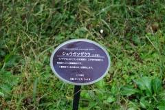DSC00021